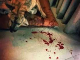 曹格被狗咬伤