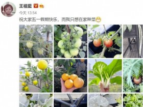 王祖蓝五一只想种菜